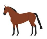 Horse in English