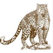 Leopard in English