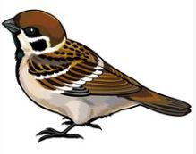 Sparrow in English