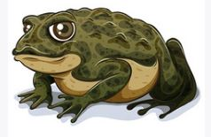 Toad in English