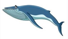 Whale in English