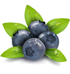 blueberry in English